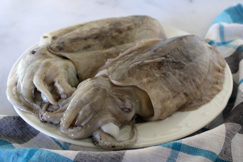 cuttlefish soupies