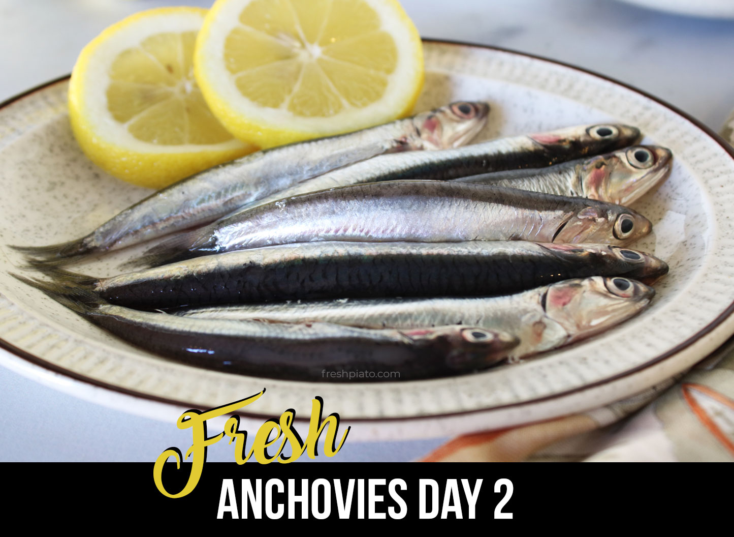 How to identify fresh anchovy day2