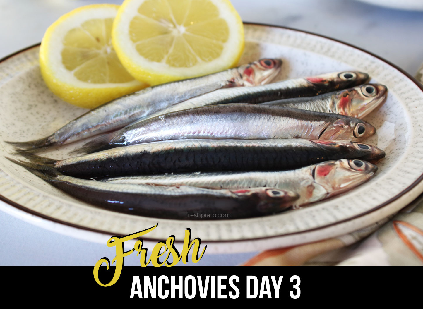 How to identify fresh anchovy day1